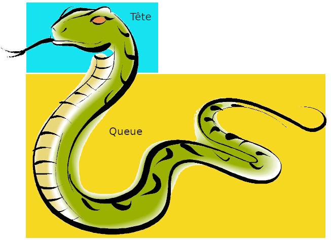 Serpent Tête et Queue